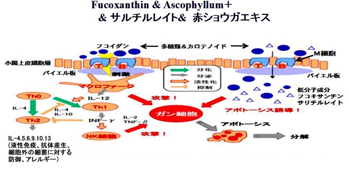 fucoxanthin-8